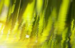 свежий зеленый цвет травы Стоковое Фото