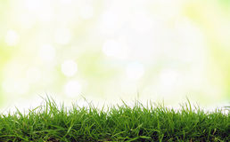 свежий зеленый цвет травы Стоковые Изображения RF
