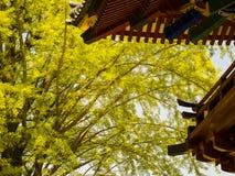 Свежий зеленый цвет через крышу святыни Nezu Стоковое Изображение RF
