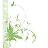 свежий зеленый цвет Стоковое Изображение