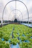 Свежий зеленый и красный vegetable салат Стоковое Изображение