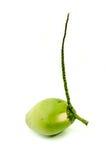 Свежий зеленый кокос Стоковые Изображения