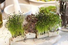 Свежий зеленый кресс-салат Стоковое фото RF