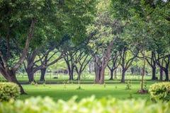 Свежий зеленый парк Стоковые Изображения RF