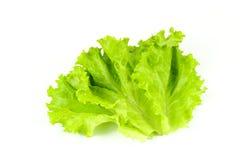 Свежий зеленый салат, зеленый салат лист Стоковая Фотография