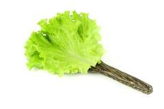 Свежий зеленый салат, зеленый салат лист Стоковые Изображения