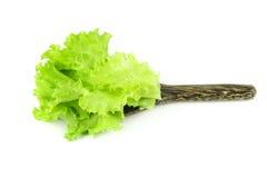 Свежий зеленый салат, зеленый салат лист Стоковое фото RF