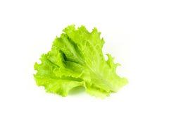 Свежий зеленый салат, зеленый салат лист Стоковое Фото