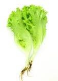 Свежий зеленый салат, зеленый салат лист Стоковое Изображение RF