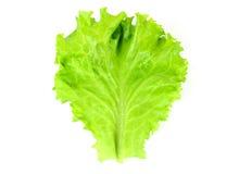 Свежий зеленый салат, зеленый салат лист Стоковые Изображения RF