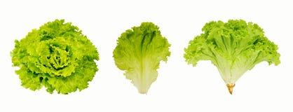 Свежий зеленый салат изолированный на белой предпосылке Стоковая Фотография