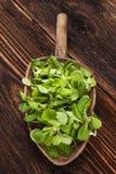 Свежий зеленый салат поля Стоковая Фотография