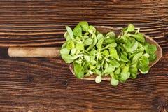 Свежий зеленый салат поля Стоковое Изображение RF