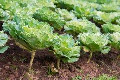 Свежий зеленый салат стоковые фото