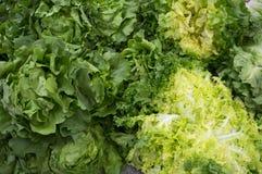 свежий зеленый салат Стоковое Фото