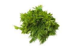 Свежий зеленый смешанный пук укропа и петрушки Стоковое Фото