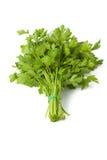 Свежий зеленый укроп петрушки Стоковое Изображение