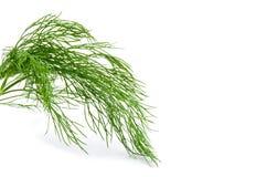 Свежий зеленый фенхель изолированный на белизне Стоковое фото RF