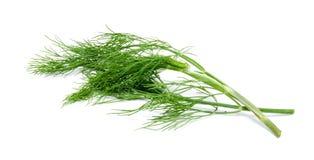Свежий зеленый фенхель изолированный на белизне Стоковое Изображение