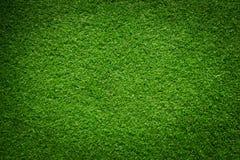 свежий зеленый цвет травы Стоковые Фото
