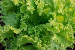 Свежий зеленый цвет стоковое фото rf
