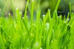 свежий зеленый цвет Стоковые Фотографии RF