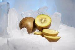 Свежий золотой киви плодоовощ замерзается на холодном голубом льде Стоковое фото RF