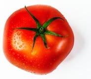 Свежий, зрелый, одиночный томат стоковые изображения rf