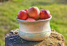 Свежий здоровый плодоовощ: зрелые яблоки на деревянной предпосылке Стоковые Изображения RF