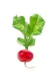 свежий изолированный красный цвет редиски Стоковое Изображение