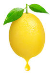 Свежий лимон стоковое изображение rf