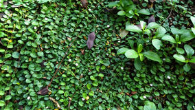 Свежий и зеленый луг Стоковое Изображение RF