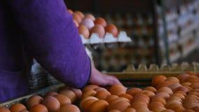 Свежий и сырцовый цыпленок eggs на конвейерной ленте, двигаемый к упаковочному дому Защита интересов потребителя, автоматизирован акции видеоматериалы
