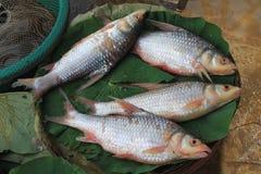 Свежий камбоджийский рыбный базар стоковые фотографии rf