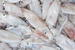 Свежий кальмар в рынке Стоковое Изображение RF