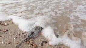Свежий кальмар на побережье после удить с морской водой сток-видео