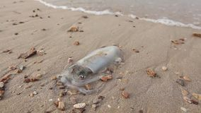 Свежий кальмар на побережье после удить с морской водой видеоматериал