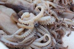 Свежий кальмар положенный на поднос Стоковые Фото