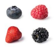 Свежий комплект ягод стоковое изображение rf