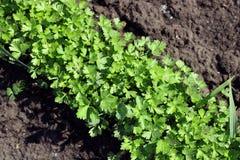 Свежий конец-вверх зеленых цветов на предпосылке почвы стоковое изображение