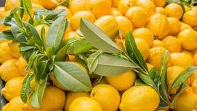 Свежий конец-вверх лимонов Стоковые Изображения