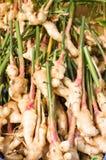 Свежий корень имбиря на рынке Стоковые Фотографии RF