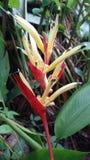 Свежий красный и желтый цветок Стоковые Фото