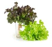 Свежий красный и зеленый овощ дуба Стоковые Фото