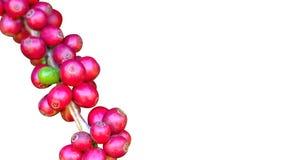 Свежий красный кофе на белой предпосылке Стоковое Изображение RF
