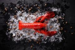 свежий красный омар Стоковые Изображения