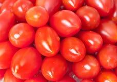 свежий красный томат Стоковые Изображения RF