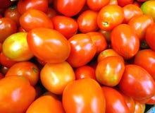 свежий красный томат Стоковые Изображения
