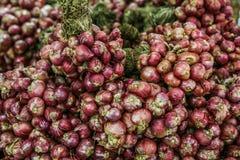 свежий красный цвет лука Стоковое фото RF
