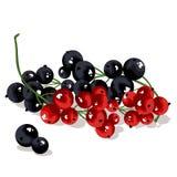 Свежий красный цвет & черная смородина Стоковое Фото